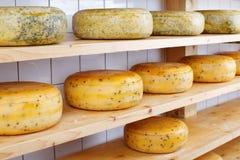 Rodas do queijo Imagens de Stock
