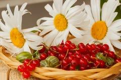 Rode aalbes in de rieten kom en camomiles Royalty-vrije Stock Fotografie
