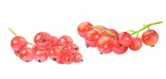 Rode aalbes die op wit wordt geïsoleerdh Royalty-vrije Stock Foto's