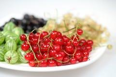 Rode aalbes en blackcurrant en kruisbessen Stock Foto