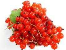 Rode aalbes op wit stock afbeelding