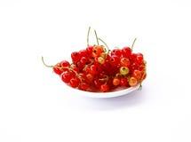 Rode aalbes op wit Stock Foto's