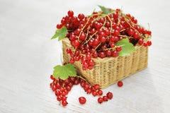 Rode aalbessen Royalty-vrije Stock Afbeelding
