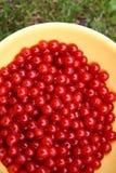Rode aalbessen Stock Foto's