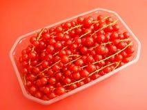 Rode aalbessen Stock Foto