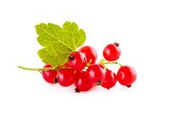 Rode aalbessen die op wit worden geïsoleerdl stock afbeelding