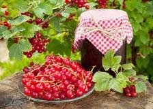 Rode aalbessen en kruik jam Stock Foto
