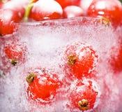 Rode aalbessen in ijs Stock Afbeeldingen