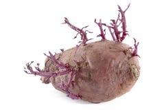 Rode Aardappel stock foto's