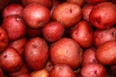 Rode aardappels Stock Afbeelding