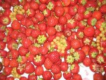 Rode aardbeien en bes op een witte achtergrond royalty-vrije stock fotografie