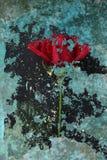 Rode abstract nam toe Royalty-vrije Stock Afbeeldingen