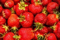 Rode achtergrond met veel rijpe sappige aardbeien Royalty-vrije Stock Afbeelding