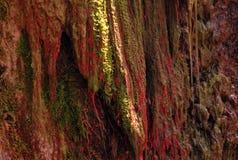 Rode algen in Tien Shan Stock Afbeeldingen