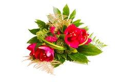 Rode amaryllis Stock Foto