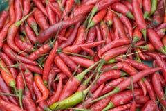 Rode & Groene Spaanse pepers Royalty-vrije Stock Foto's