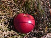 Rode appel Stock Fotografie