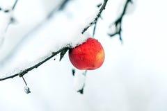 Rode appel op de witte sneeuw stock fotografie