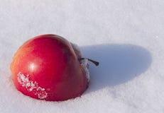Rode appel op sneeuw Royalty-vrije Stock Foto