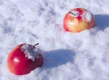 Rode appel op sneeuw Stock Afbeeldingen