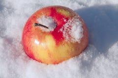 Rode appel op sneeuw Stock Fotografie