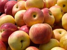 Rode appelen Stock Fotografie