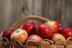 Rode appelen! Stock Afbeeldingen