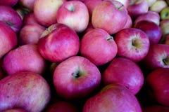 Rode appelen in de markt voor verkoop Royalty-vrije Stock Afbeeldingen