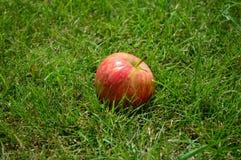 Rode appelen, de zomer, gras, vitaminen, vruchten royalty-vrije stock afbeeldingen