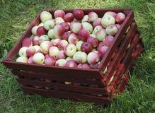 Rode appelen in doos Stock Foto's