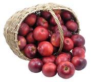 Rode appelen in geïsoleerdee mand - Stock Fotografie
