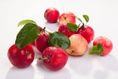 Rode appelen met bladeren Royalty-vrije Stock Foto