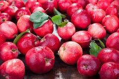 Rode appelen met bladeren Royalty-vrije Stock Foto's