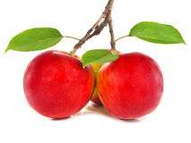 Rode appelen op een tak stock fotografie