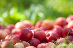 Rode appelen op het gras Royalty-vrije Stock Afbeeldingen
