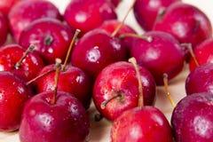 rode appelen rode Ranetok Royalty-vrije Stock Foto