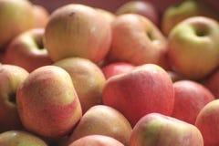 Rode appelen ter plaatse, Verse appelen Royalty-vrije Stock Afbeelding