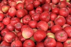 Rode appelen voor verkoop Royalty-vrije Stock Afbeeldingen