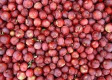 Rode appelenachtergrond Stock Foto's