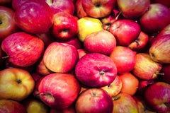 Rode appelenachtergrond De verse organische rode appel komt onder vele appelenachtergrond duidelijk uit in de markt Close-up gesc Stock Afbeeldingen