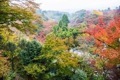 Rode Autumn Japanese-tuin Royalty-vrije Stock Foto's
