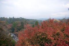 Rode Autumn Japanese-tuin Stock Afbeeldingen