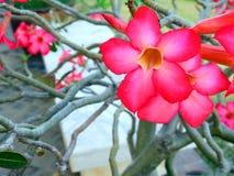 Rode azaleabloemen royalty-vrije stock afbeeldingen