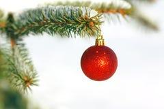 Rode bal op de Kerstboom Royalty-vrije Stock Foto's