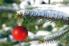 Rode bal op de Kerstboom Stock Foto's