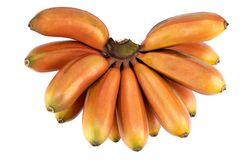 Rode banaan, rood Dacca, Bordeauxbanaan, Cavendish-banaan stock foto's