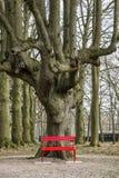 Rode bank onder een boom Stock Foto