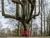 Rode bank onder een boom Stock Afbeeldingen