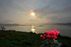 Rode begoniabloemen met mooie ochtendmening royalty-vrije stock fotografie