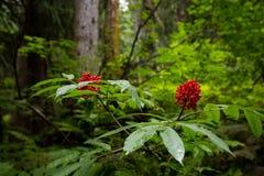 Rode Bessen in Groen Bos Royalty-vrije Stock Afbeelding